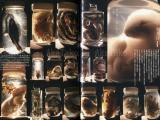 Talking Heads No. 46 Magazine Secret Love Toy - Neqro